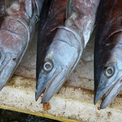 Babybrei Fisch