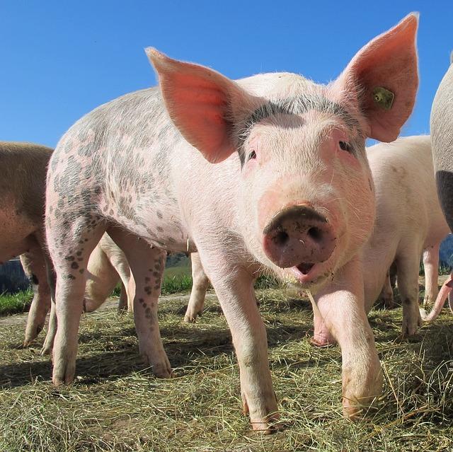 Babybrei mit Schweinefleisch