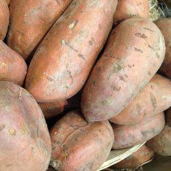 Babybrei Süßkartoffel